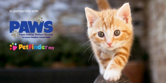 Uber Malaysia is delivering kittens on demand for charity